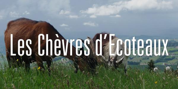 Les Chèvres d'Ecoteaux