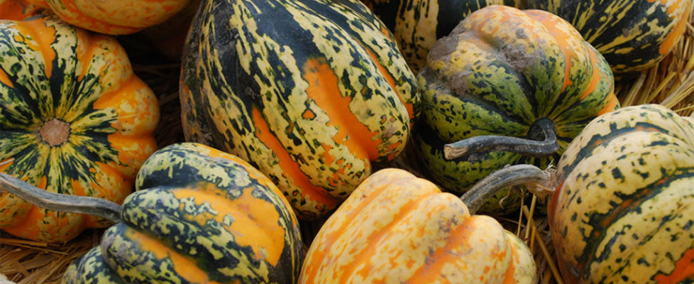 recette courge 2